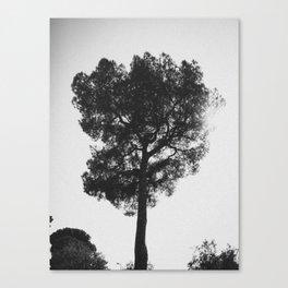 Testigo mudo Canvas Print