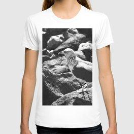 Seagull on Rocks T-shirt