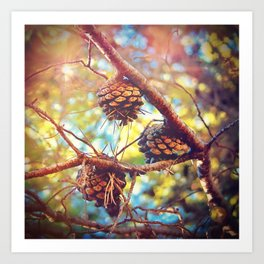 Autumn pine cones  #photography Art Print