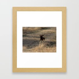 Dachshund  Dog Jumping in The Field Photography Framed Art Print