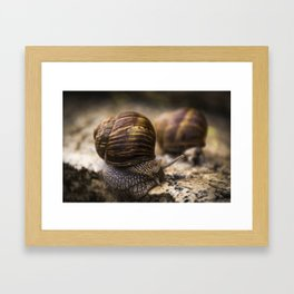 Csigák Framed Art Print