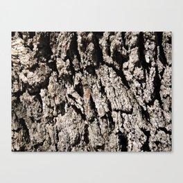 TEXTURES: Englemann Oak Bark Canvas Print