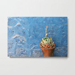 Peruvian succulent Metal Print