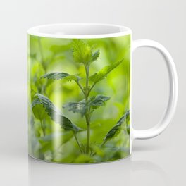 Fresh summer herbs in the garden Coffee Mug