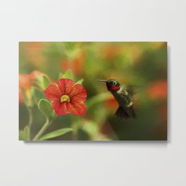 Male Ruby and a Petunia Bloom Metal Print