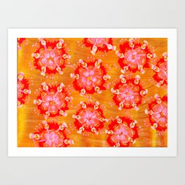 Apricot Calliope Rose Art Print