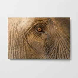 Jungle elephant: Cambodia Metal Print