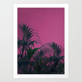 Pink Sunset Palm Art Print