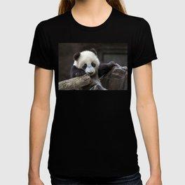 Baby panda climb a tree T-shirt