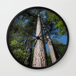Tall Pine Trees in Mt. Lemmon Wall Clock