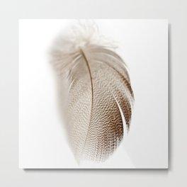 Mallard Feather Metal Print
