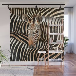 Portrait Of A Zebra - Modern Wildlife Photography Art Wall Mural