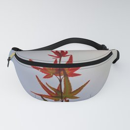 Growing Fanny Pack