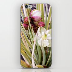 Yucca Flowers in Bloom iPhone & iPod Skin