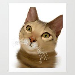 Joey Kitten Art Print