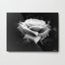 Pink Roses in Anzures 6 Dark Metal Print