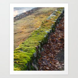 Morning Light Moss Art Print