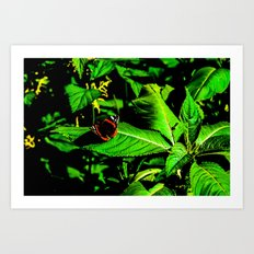 Butterfly rest on leave Art Print