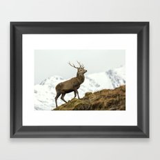 Red Deer Stag in Winter Framed Art Print