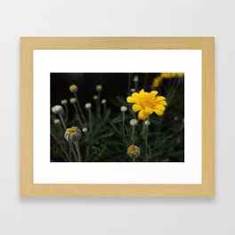 Spring - Chrysanthemum Framed Art Print