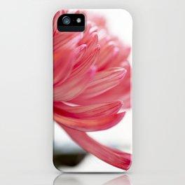 Chrysanthemum Flower IV iPhone Case