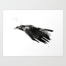 Crow 717 Art Print