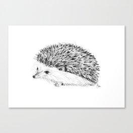 Porcupine | Animal Illustration Canvas Print