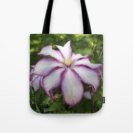Clematis - Stunning two-tone flowers Tote Bag