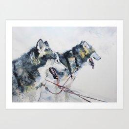 Huskies Art Print