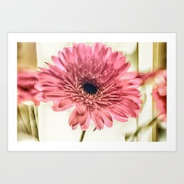 A Daisy for You a bouquet of Gerber Daisies Art Print