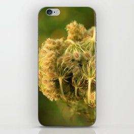 Queen Anne's Lace Flower About to Bloom iPhone Skin