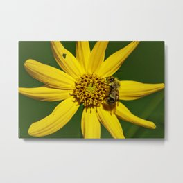 The Bumble and The Sunflower #3 Metal Print