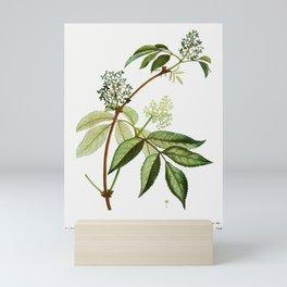 Red elderberry (Sambucus racemosa) from Traité des Arbres et Arbustes que l'on cultive en France en Mini Art Print