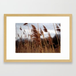 stay in the wind. Framed Art Print