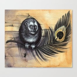 Owl Monkey Canvas Print