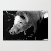 pigs Canvas Prints featuring Pigs by Michael Bou-Nacklie