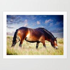 exmoor pony Art Print