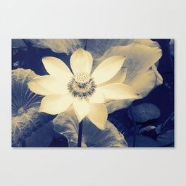 Lotus Flower blue and cream duotone picture Canvas Print