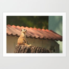 Meerkat Funny Observer #decor #society6 Art Print