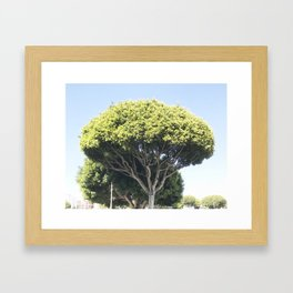 all the trees in los angeles, cropped Framed Art Print