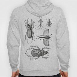 Vintage Beetle black and white drawing Hoody