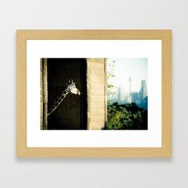 Giraffe (Taronga Zoo Sydney) - The View From My Room Framed Art Print