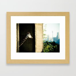 Giraffe (Taronga Zoo Sydney) - The View From My Room Framed Art Print