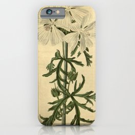 Flower 2298 malva moschata undulata Undulated Musk Mallow10 iPhone Case