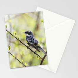 Yellow Rumped Warbler  Stationery Cards