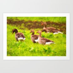 Wild geese in the march Art Print
