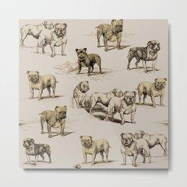 ENGLISH BULLDOGS  & MOCHA CREAM  Metal Print