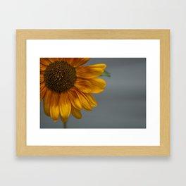 Sunflower in Yellow Framed Art Print