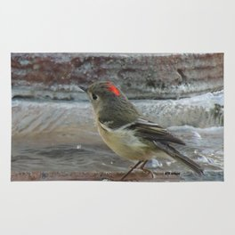 Ruby-Crowned Kinglet At The Fountain Rug