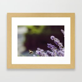 Lavande Framed Art Print